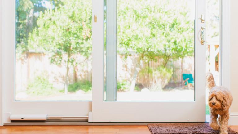 Wayzn porte patio coulissante intelligente chien