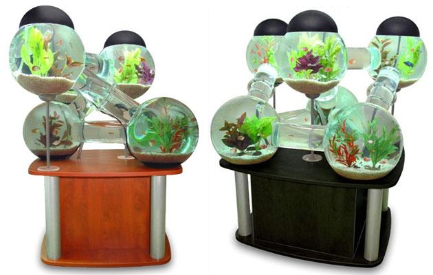 Aquarium de 6 bocaux pour poissons for Aquarium poisson rouge sans pompe