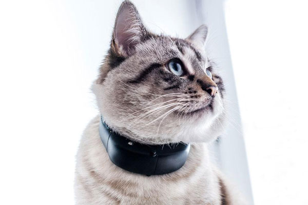 gps tractive cat