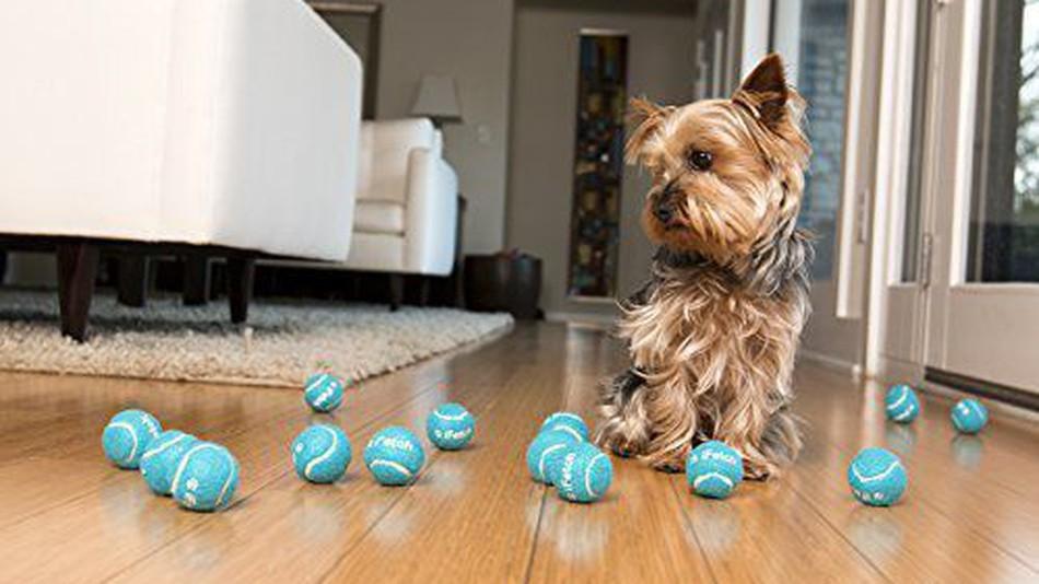 un lance balles pour garder votre chien en forme. Black Bedroom Furniture Sets. Home Design Ideas