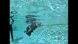 Bébé qui flotte et qui nage