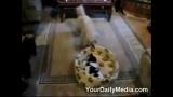 Dispute entre un chien et un chat