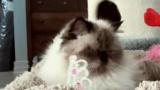 Une chatte qui vous souhaite une belle St-Valentin