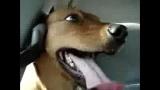 Un chien qui rit