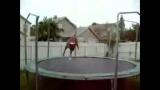 Chien qui saute sur un trampoline
