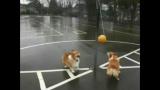 Un jeu de ballon pour chien!