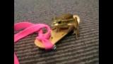 Dave, la grenouille en skate-board!