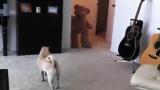 Un chien qui a peur d'un ourson